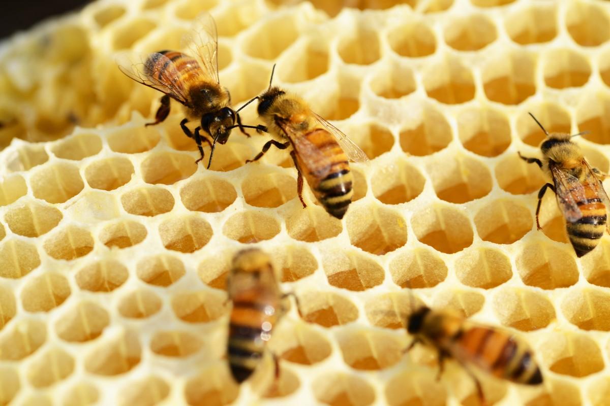 Una serata in compagnia delle api